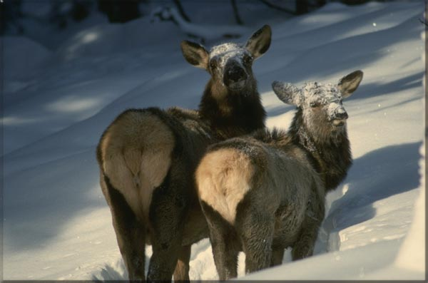 New Mexico Wildlife