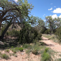Galesteo Basin Preserve Cottonwood Trailhead