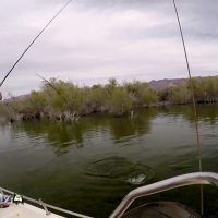 Tired of the Ski Slopes for the Season? Try Arizona Bass Fishing at Lake Mohave!
