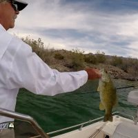 Tired of the Ski Slopes for the Season Try Arizona Bass Fishing