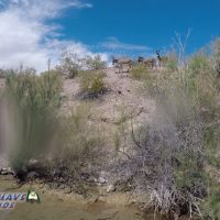 Carp and Burros on Lake Mohave