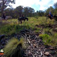 Horseback Trail Ride Cibola National Forest